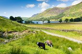 stock photo of haystack  - Buttermere English Lake District Cumbria England uk on a beautiful sunny summer day surrounded by fells including High Stile - JPG