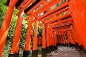 picture of inari  - Thousands of Torii with green trees background - JPG