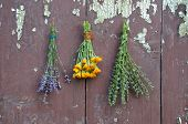 image of hyssop  - medical herbs bunch on old wooden wall p marigold calendula hyssop and lavender - JPG