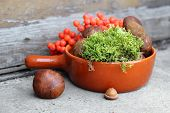 stock photo of bolete  - boletes and rowan in red terracotta pan - JPG