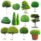 stock photo of tree trim  - Collage of green trees and bushes isolated on white - JPG