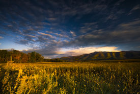 stock photo of cade  - Autumn color at dusk in a golden grass - JPG