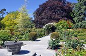 picture of plant species  - the sun dial is in the lady norwood rose gardens in Christchurch botanical gardens new zealand is the home of this rose arch established in 1868 the garden mixes native forest with planted species - JPG