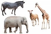 image of terrestrial animal  - A composition with animals isolated on white - JPG