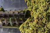 foto of wine-press  - pressure grapes at the winery in Italy - JPG