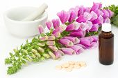 image of digitalis  - Common foxglove with mortar pestle and cardiac agents over white background - JPG