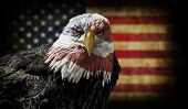 pic of bald head  - Digital oil painting of a majestic Bald Eagle with the USA flag across it - JPG