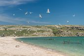 pic of azov  - Seagulls fly over the fishing village on the shore of the Sea of Azov in Crimea - JPG