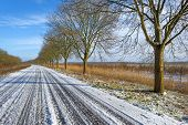 image of row trees  - Row of trees along a snowy road in winter - JPG