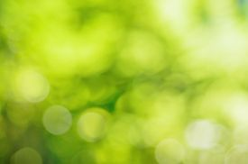 foto of greenery  - Natural outdoors bokeh background  in green and yellow tones with sun rays - JPG