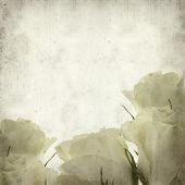 pic of pale  - textured old paper background with pale yellow rose flower - JPG