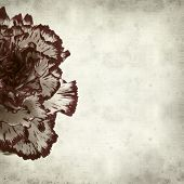 picture of carnation  - textured old paper background with variegated carnation flower - JPG