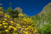 picture of municipal  - Inland Gran Canaria Valsequillo municipality view towards Roque del Pino - JPG
