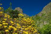 image of municipal  - Inland Gran Canaria Valsequillo municipality view towards Roque del Pino - JPG
