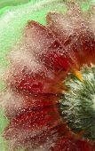 ������, ������: Frozen Flora