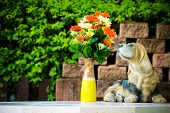image of bobbies  - Flower and dog statues on wall background - JPG