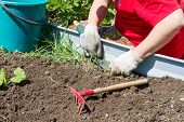 stock photo of weed  - Digging up weeds on the farm with a garden shovel and rake - JPG