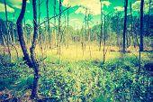 picture of wetland  - Vintage photo of wetlands at springtime - JPG