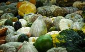 pic of gourds  - Large variety of pumpkins - JPG