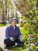 pic of weed  - Woman weeding in the garden and she use protective gloves - JPG