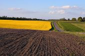 foto of rap  - raps and ground fields and forest colorful landscape - JPG