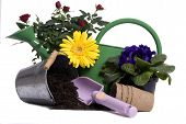picture of plant pot  - a watering bucket with a rose and all the gardening tools to plant it - JPG