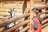 Little boy with goat in zoological garden poster
