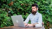 Early Morning Hours. Hipster Enjoying Coffee And Free Wifi In Morning. Bearded Man Drinking Morning  poster