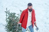 Man With Beard Bears Home A Christmas Tree. Winter Portrait Of Lumber In Snow Garden Cutting Christm poster