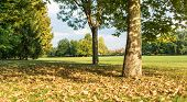 Landscape Of The Park At The End Of Summer. Autumn Is Approaching. Leaves Fallen From Trees On Green poster