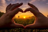 Hands In The Shape Of Heart Against The Sunrise Over The Field With Flowers. poster
