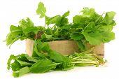 pic of turnip greens  - fresh turnip tops  - JPG