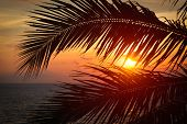 Beach vacation romantic holidays background - ocean sunset visible through palm leaves. Varkala, Ker poster