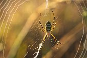 Close Up Of A Spider In Nature. Amazing Nature. Close Up Of A Spider Making Web. Spider. Nature. Hug poster
