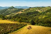 Green Valley With Cows Nature Landscape. Mountain Layers Landscape. Summer In Mountain Countryside L poster