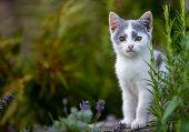 Little Kitty In The Garden, Small Beautiful Young Kitty, Portrait poster
