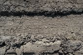 Wheel Tracks On The Soil. Tire Tracks On The Ground. Soil Texture Background. Ground. Soil Closeup A poster
