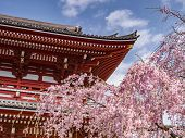 Cherry Blossom At Senso-ji Buddhist Temple In Tokyo, Japan poster