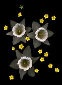 picture of jonquils  - assemblage of 3 jonquils and 15 yellow blossoms - JPG