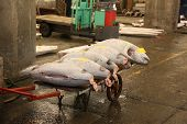 pic of yellowfin tuna  - Giant Frozen Tuna for sale in a Tokyo fish market - JPG