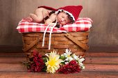 foto of little red riding hood  - 14 day old newborn baby girl dressed as Little Red Riding Hood and sleeping on a vintage wooden picnic basket surrounded with flowers - JPG