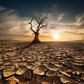 stock photo of lonely  - Global warming concept - JPG