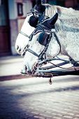 picture of hackney  - Traditional horse - JPG