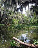 foto of bayou  - Swamp New Orleans - JPG