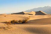 pic of mesquite  - Sand dunes of Mesquite Flat in Death Valley Desert  - JPG