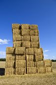 picture of briquette  - Briquettes of dry hay in a field in the north of France - JPG