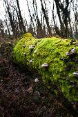 Постер, плакат: Moss And Mushrooms On Rotting Tree