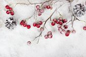 pic of berries  - Christmas branch with berries on snow background - JPG
