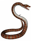 pic of anaconda  - 3D rendered snake on white background isloated - JPG