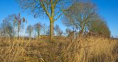 image of row trees  - Row of trees along a railroad in winter - JPG